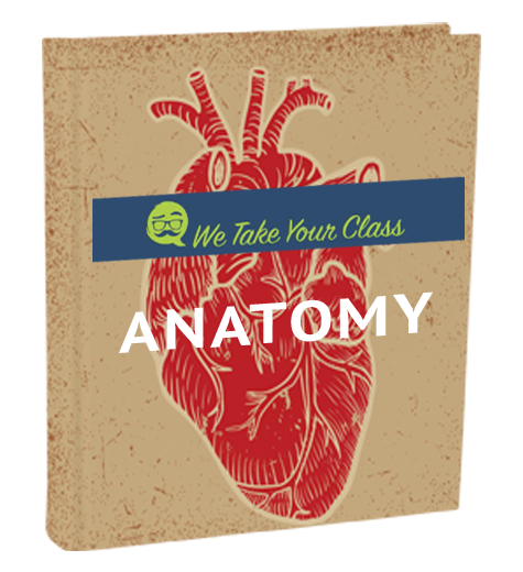 short essay questions in anatomy